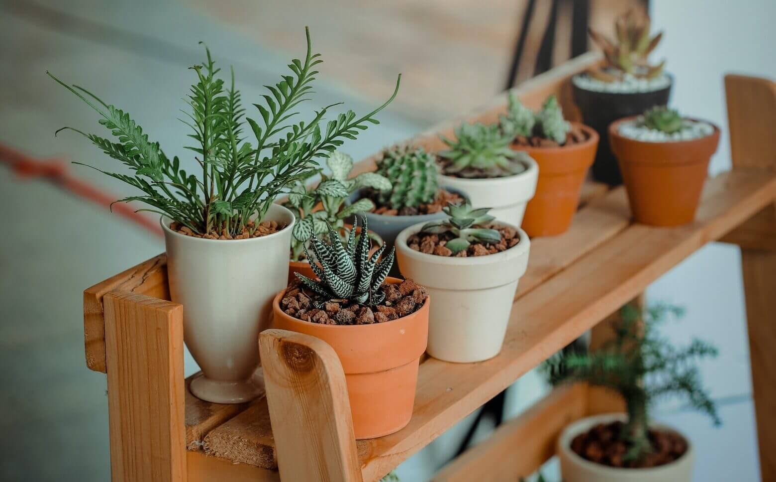 3 Beginners Indoor Plants Great For Reducing Air Pollution